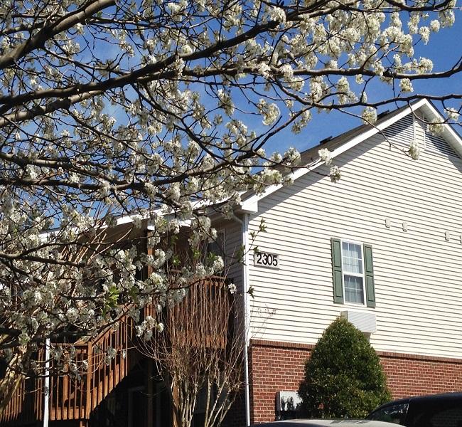 Low Income Studio Apartments: Affordable Housing Management, Inc.